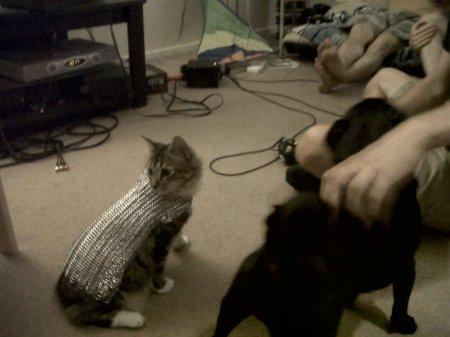 cat-vs-pugs5.jpg?w=450&h=337